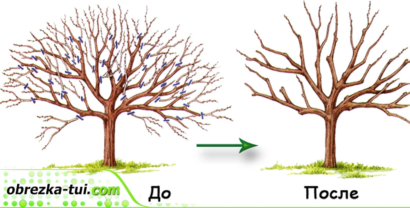 оброзка деревьев