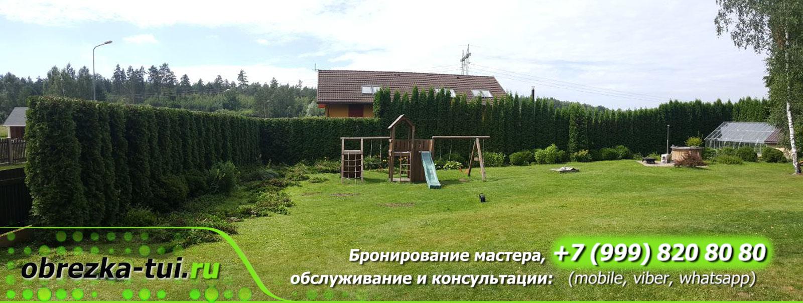 Стрижка туй Москва услуги цена